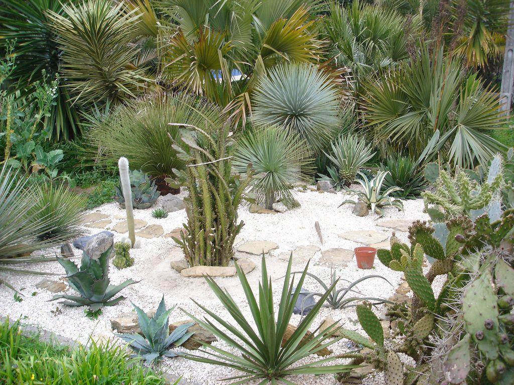 Decoracion actual de moda jard n de piedras espectacular - Jardines con cactus y piedras ...