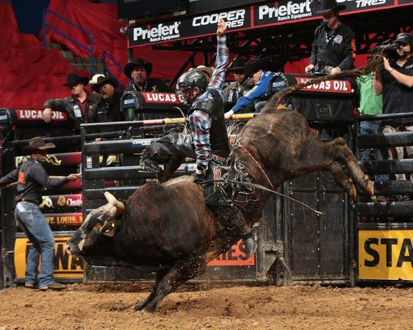 PBR @PBR Feb 12, 2016 Nevada Newman delivers the night's top score (88.25) on Ante Up during his BFTS @PBR debut! #PBRSTL