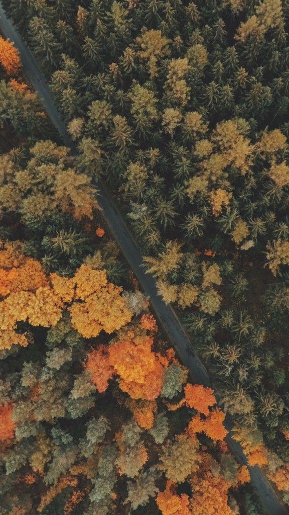 8 Free Autumn Inspired iPhone 7 Plus Wallpapers Фоны для