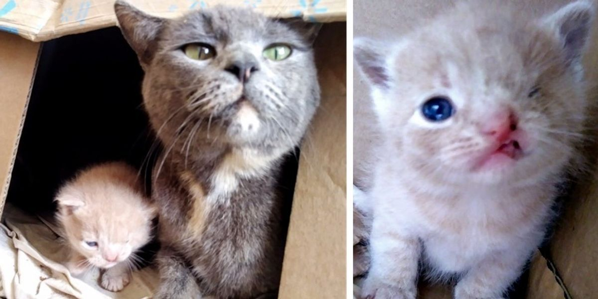 Stray Cat Takes Rescuers To Her Kittens One Of Them Has A Permanent Wink Love Meow