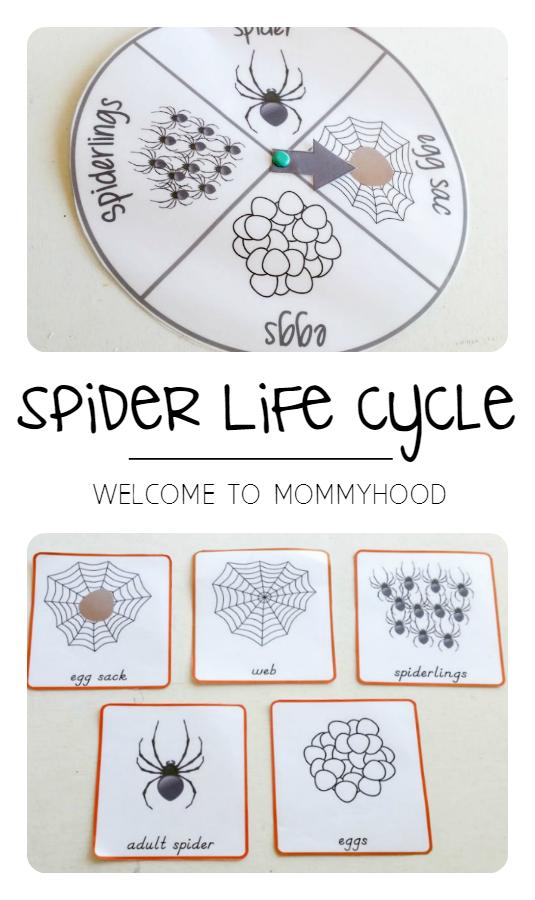 Spider Life Cycle Activities For Montessori Inspired Activities The Very Busy Spider Spider Activities Spiders Preschool