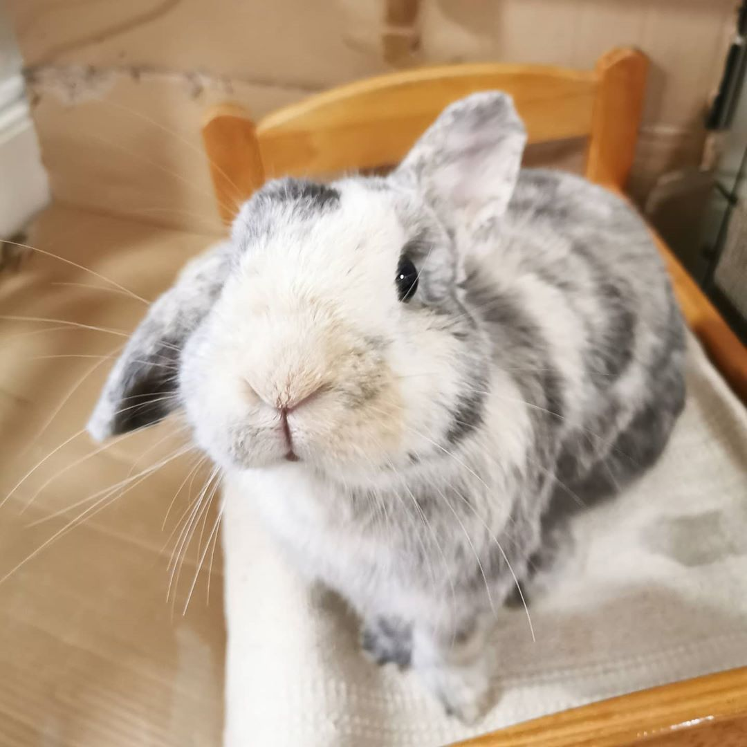 rabbit care indoor in 2020 Cute baby animals, Cute baby