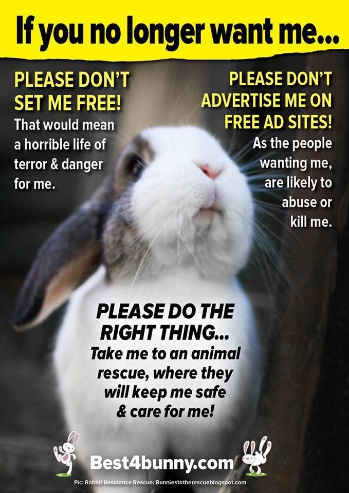 Pin By Jo Allen On Rescue Bunny Mom Therapy Animals Pet Bunny