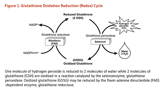 glutathione depletion essay General antioxidant actions  selenium deficiencies result in glutathione peroxidase depletion  see my essay mechanisms of aging.