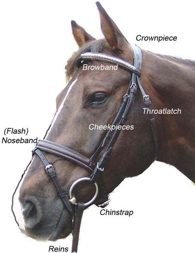Labeled Parts Of A Horse : labeled, parts, horse, Parts, English, Bridle, Images, Horse, Bridle,, Horses,, Lover