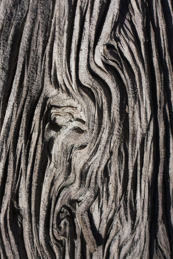 Tree Bark Textures With Intricate Patterns Organic