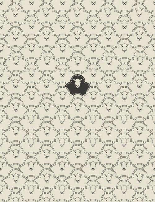 Black Sheep Wallpaper