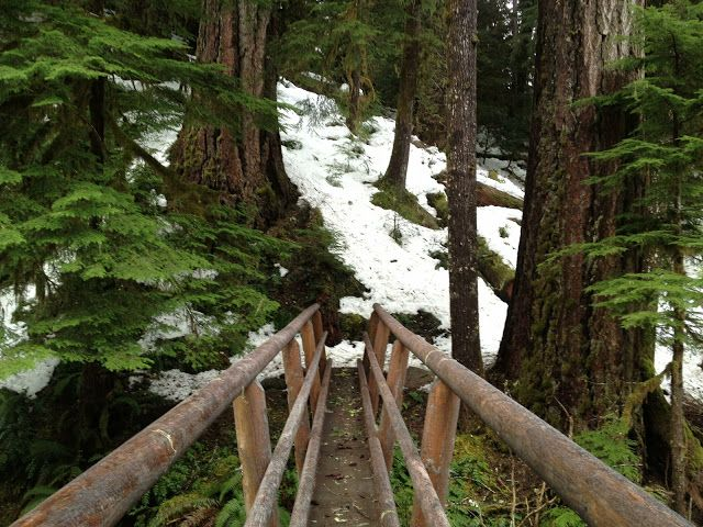 Snowy Day On Lookout Creek Old-Growth Trail | Cascadia ... on Cascadia Outdoor Living Spaces id=49846