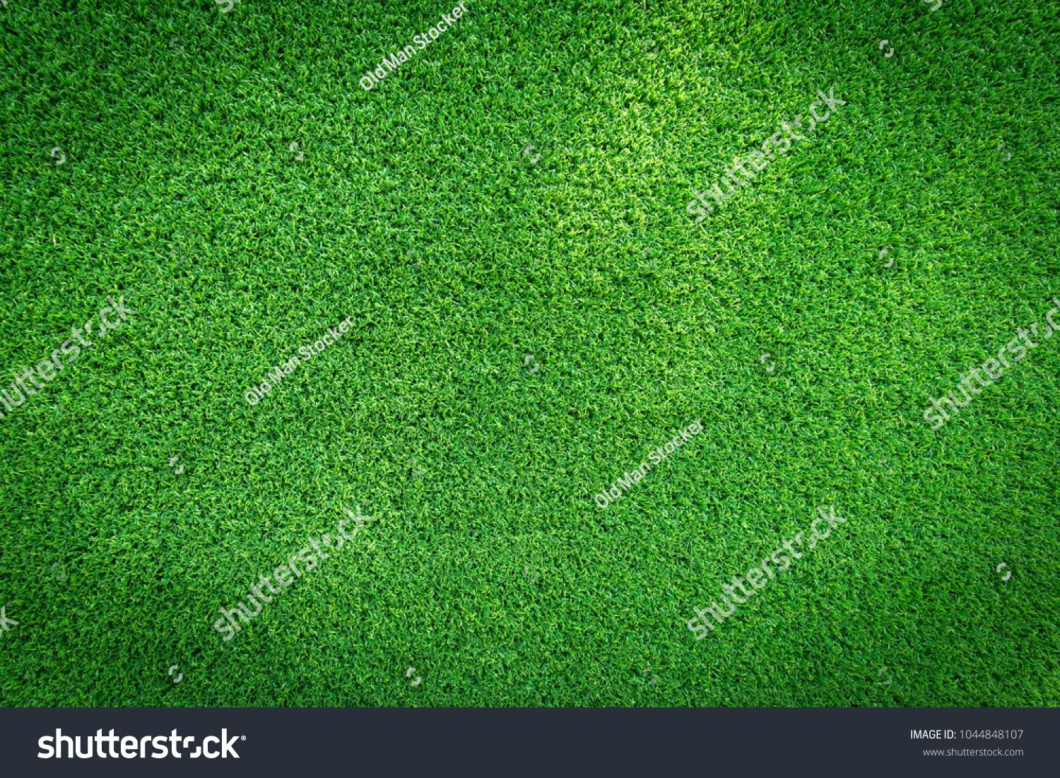 Grass Field Texture For Golf Course Soccer Field Or Sports Background Concept Design Artificial Grass Grass Background Green Grass Background Grass Textures