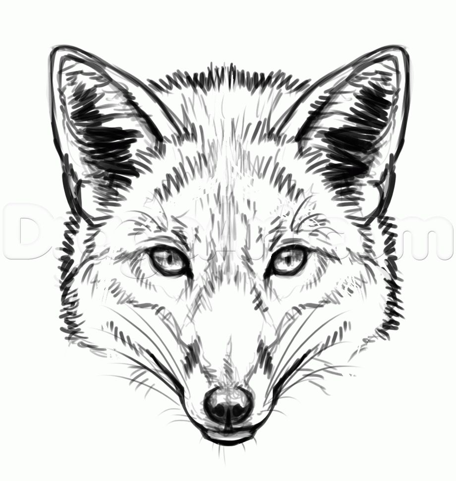 Face line drawing fox drawing drawing guide fox sketch animal line drawings
