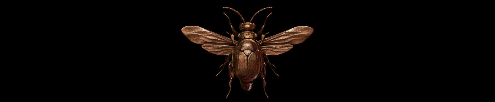 Engraved Entomology on Behance