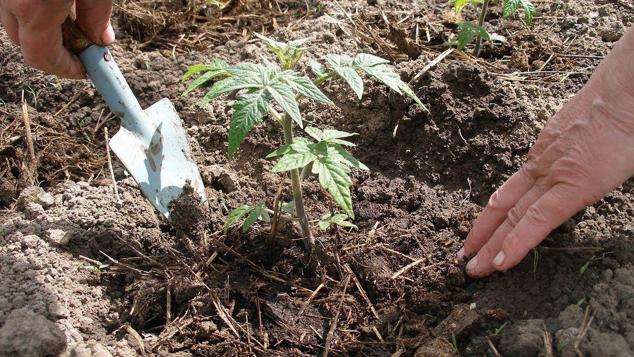 в какую почву сажать рассаду