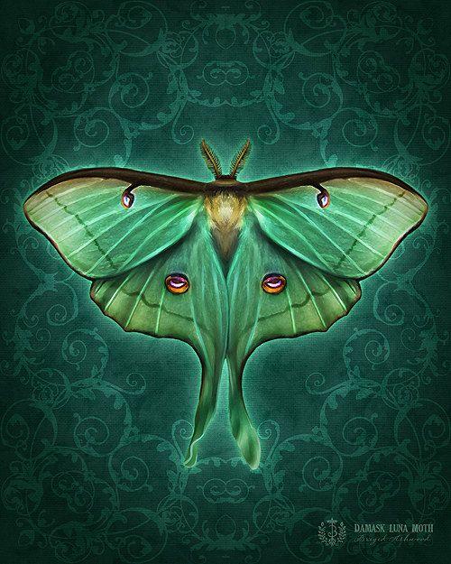 Damask Luna Moth Art Print Brigid Ashwood By Brigidashwood 15 00 Moth Art Luna Moth Moth Art Print
