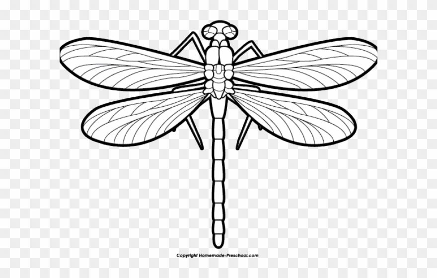 Dragonfly Clipart Scroll Dragon Fly Black And White Png Download 293383 Is A Creative Clipart Download T Dragonfly Clipart Black And White Png Clip Art