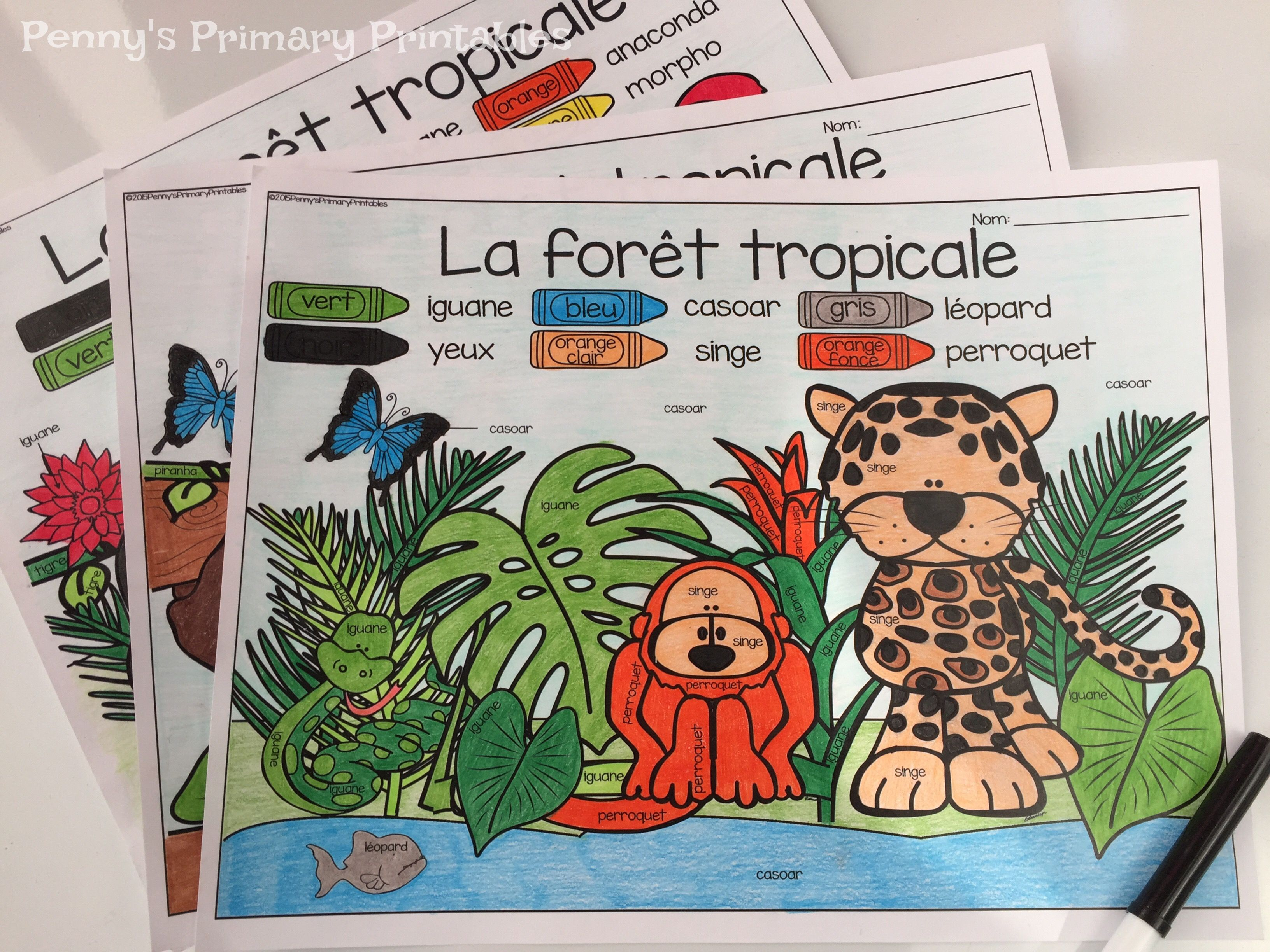 French Rainforest Animals Write The Room Les Animaux De