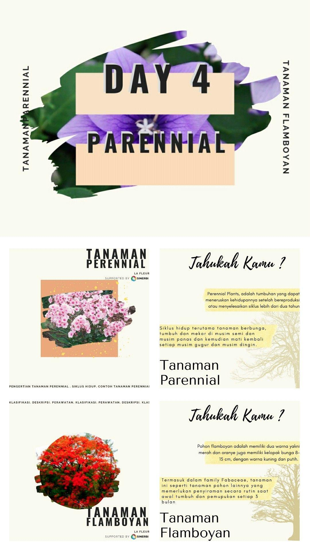 Tanaman Hias Perennial : Flamboyan