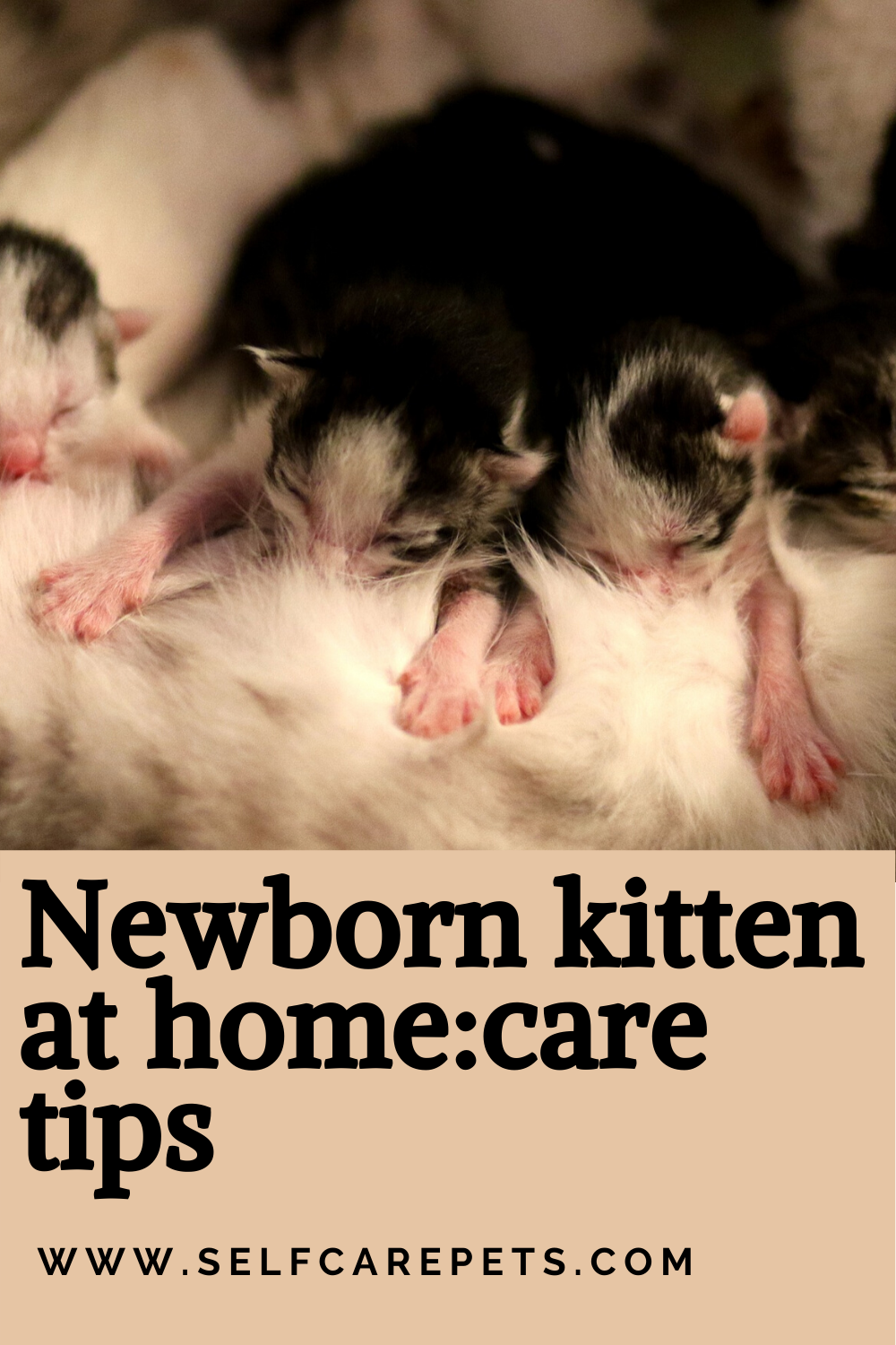Newborn Kitten At Home Care Tips In 2020 Newborn Kittens Pet Care Cats Kitten Care