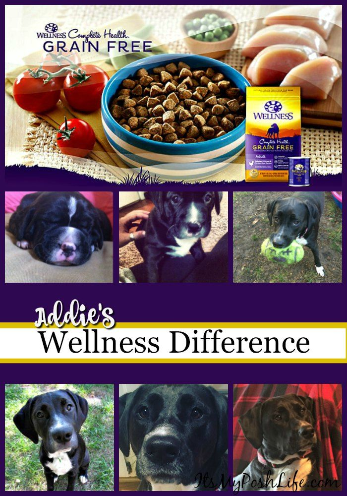 Addie S Diary Wellnesspet Wellness Petsmart Ad My Repins
