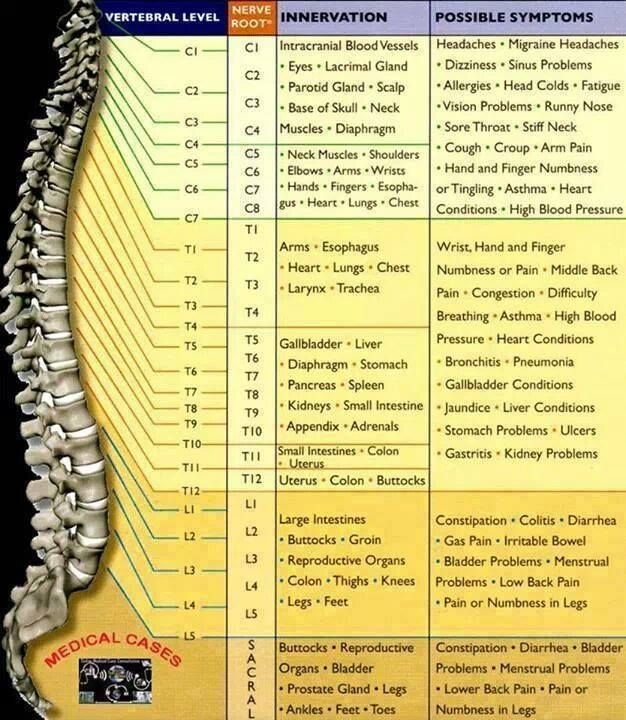 Spinal Cheat Sheet Reflexology Physical Therapy Health