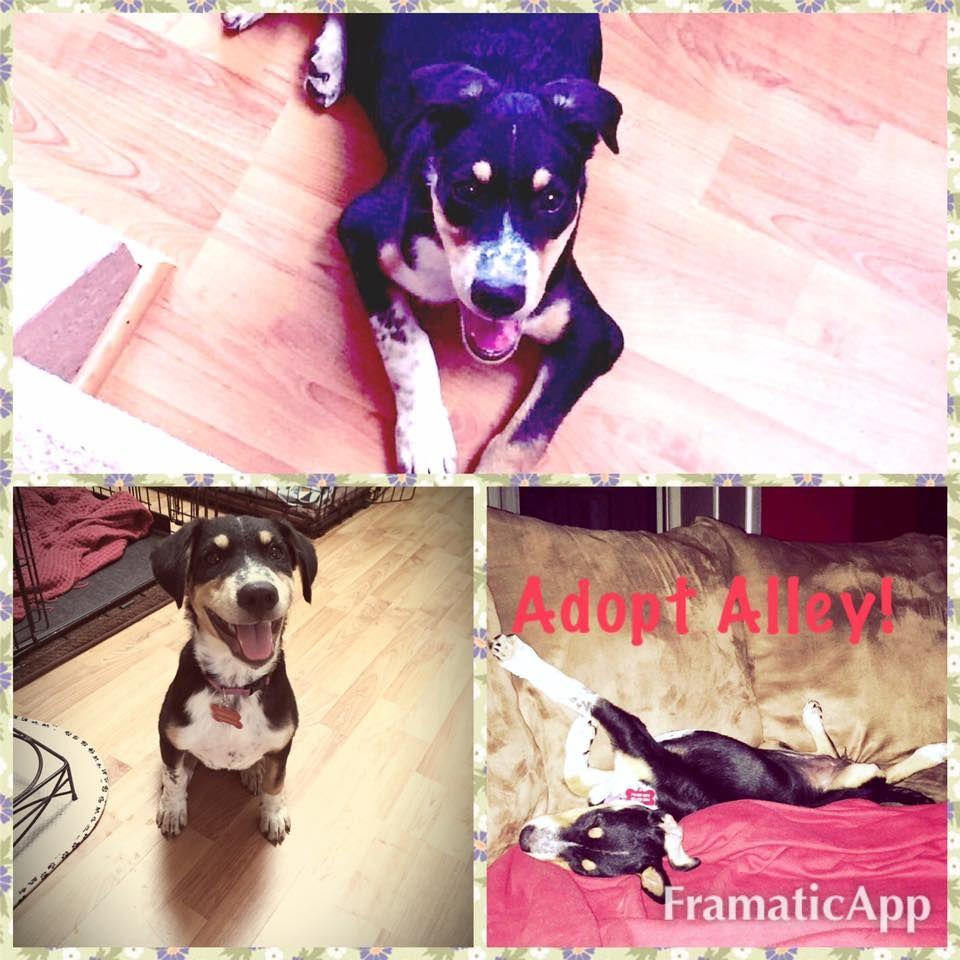 09/09/16HOUSTON Jamie's Animal Rescue September 5 at 2