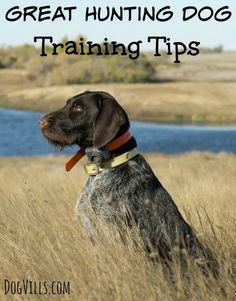 Great Hunting Dog Training Tips Dog Training Training Your Dog