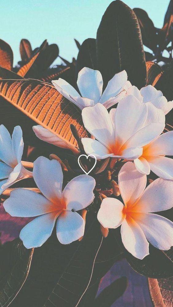 36 elegante Blumenhintergründe, die Sie speichern müssen - Seite 30 von 36, ... #backrounds