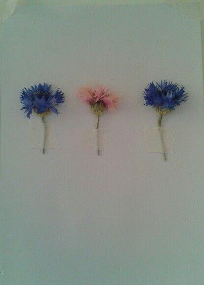 Pressed cornflowers