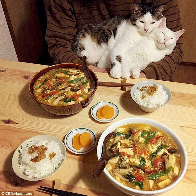 Japanese Couple Share Photos Of Their Cats Watching Them Eat Cat Watch Cute Animals Pretty Cats