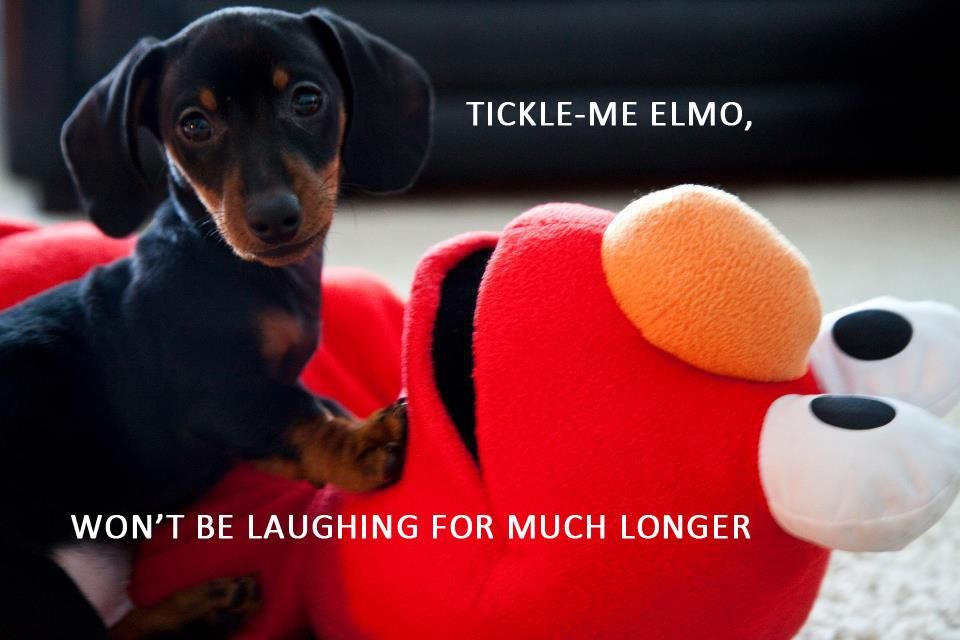 Poor Elmo didn't know what was coming... He didn't stand a chance