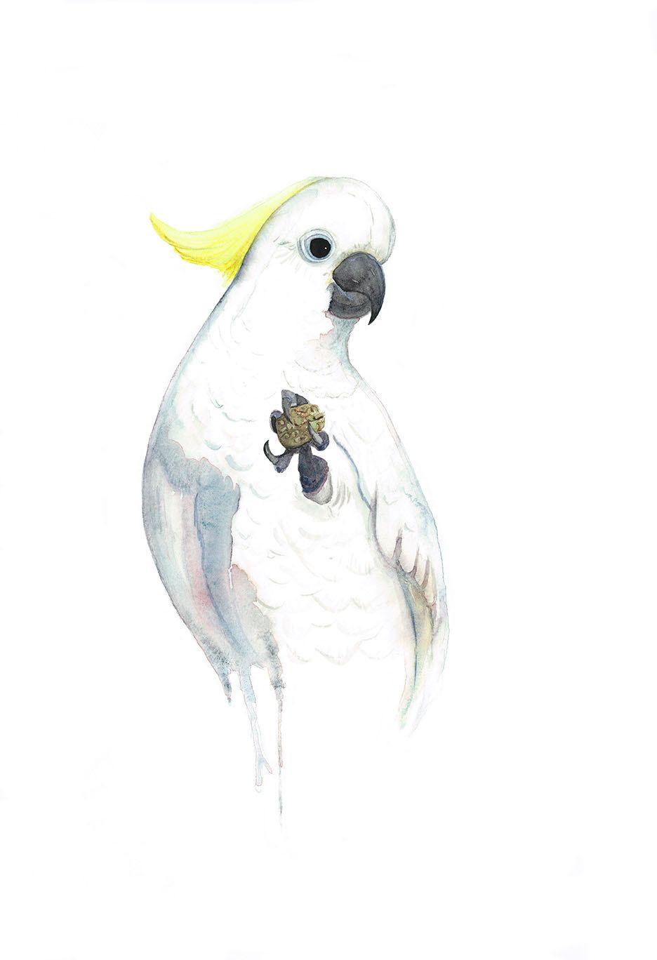 Sulphurcrested Cockatoo Print