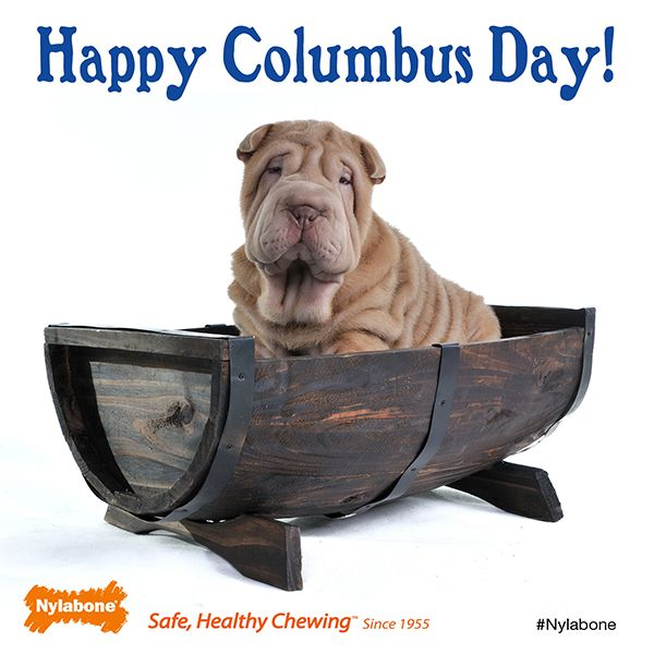 Happy Columbus Day To You And Your Little Explorer Pets Dogs Columbusday Cute Cats And Dogs Best Dogs Happy Columbus Day