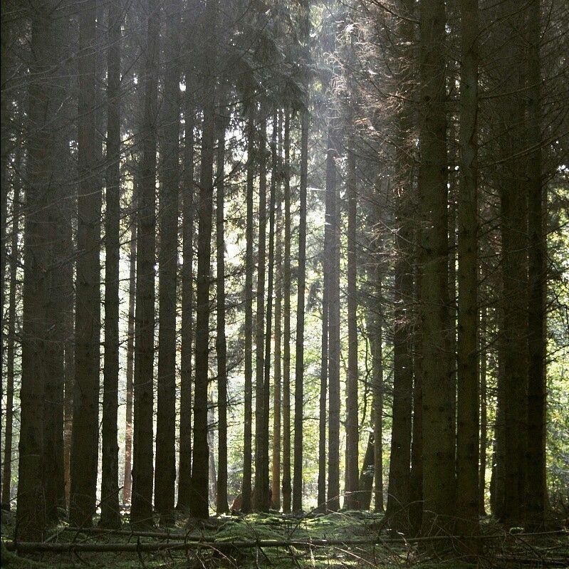 #fichtenwald