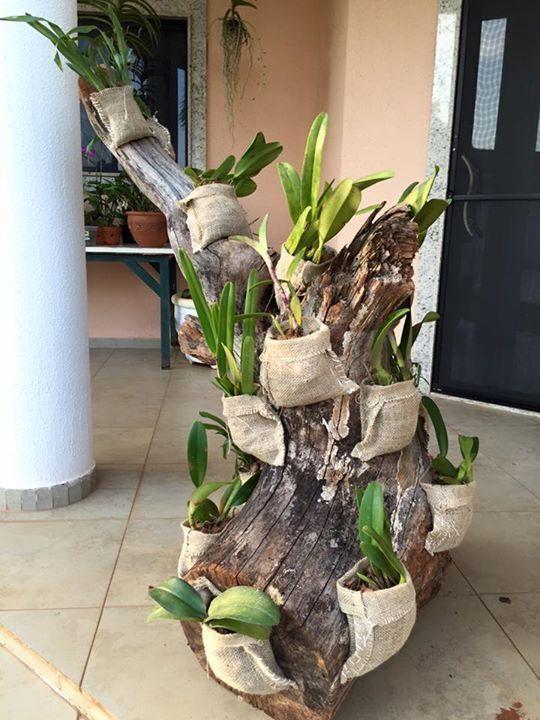 Reaproveitamento de tronco para por outras plantas e vaso - Maceta para orquideas ...