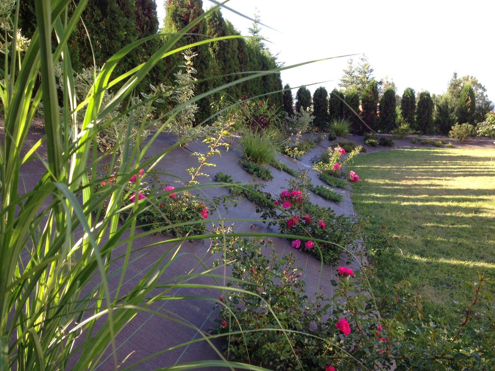 planter sur une butte de terre recherche google jardin pinterest vivre dehors vivre et. Black Bedroom Furniture Sets. Home Design Ideas
