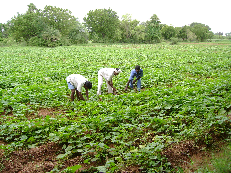 Land For Sale 1 Lakh Per Acre