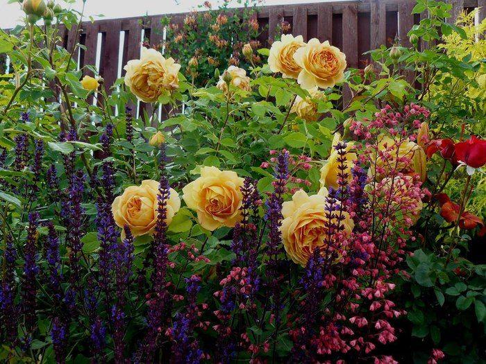 Парковые розы (50 фото): аристократизм и ностальгическая изысканность вашего сада http://happymodern.ru/parkovye-rozy-foto/ parkovaya_rosa_064