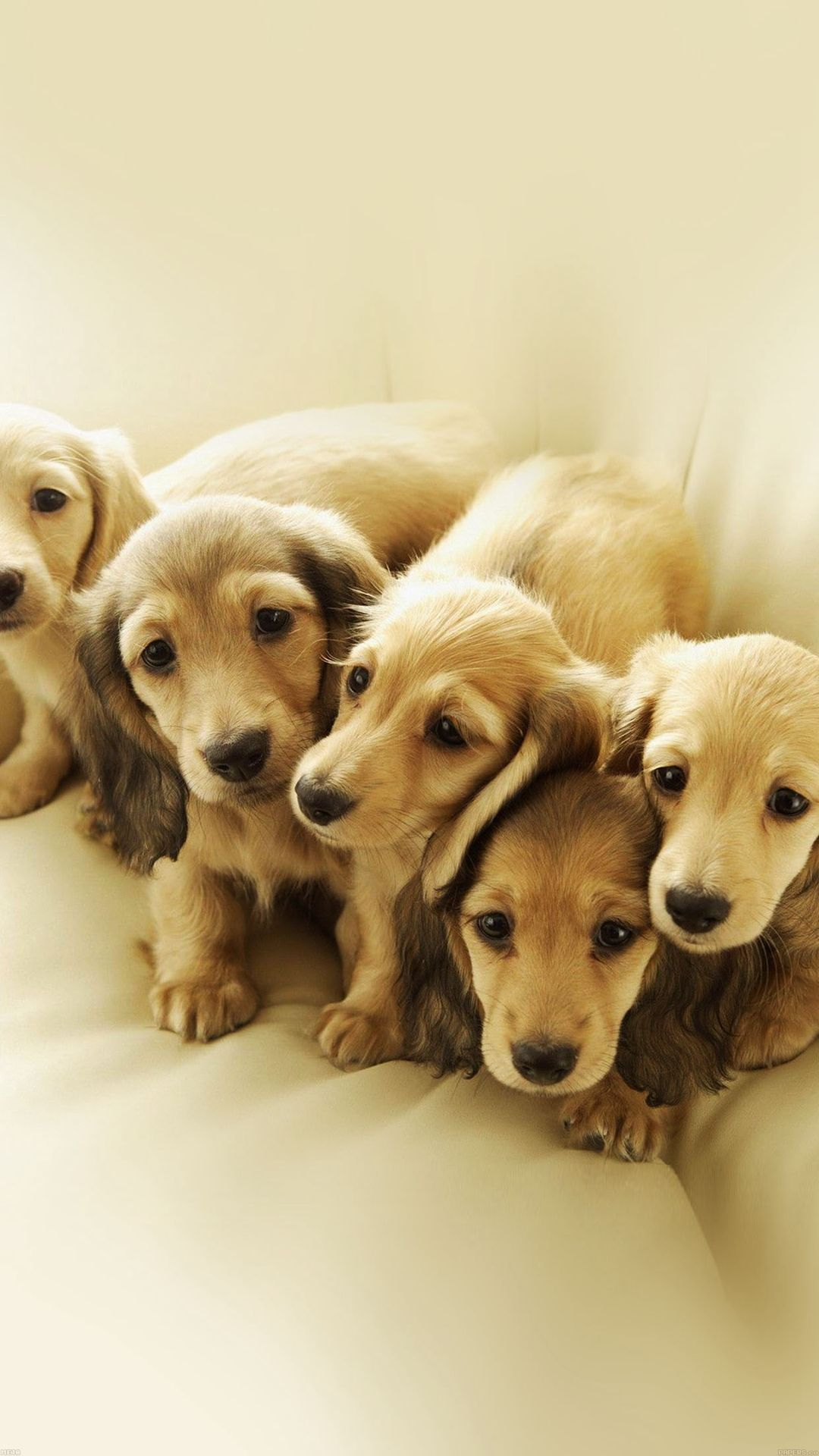Puppy Retriever Family Animal Iphone 8 Wallpaper Dog