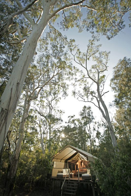 Deluxe safari camping at Paperbark Camp