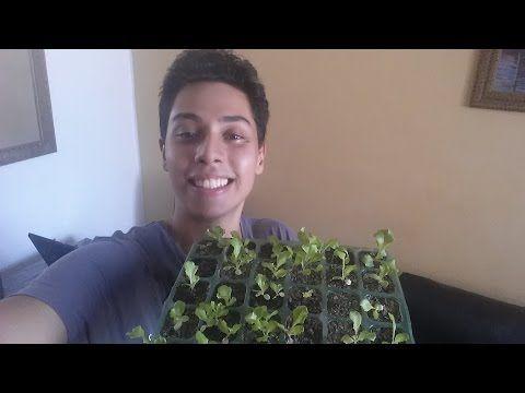 Como Germinar sementes(da forma mais facil) - YouTube
