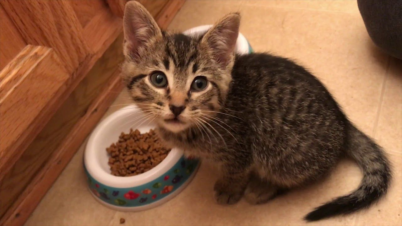 What To Do Kitten Has Diarrhea And Worms Food Allergies Cat Litter Kitten
