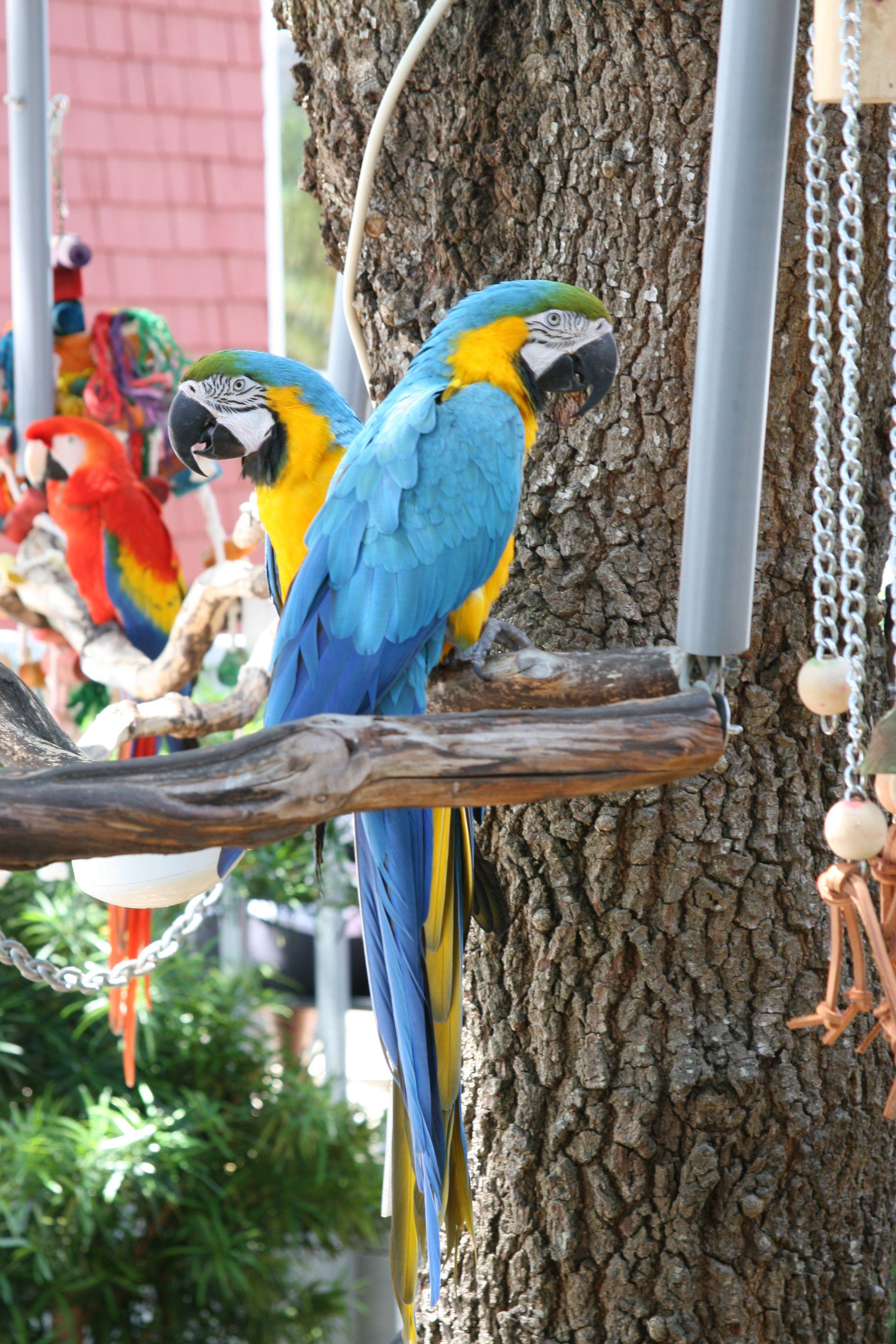 Feathered Friends At Salty Dog Hiltonhead Summer Vacation Hilton Head South Carolina Hilton Head Island Sc Sea Pines Hilton Head