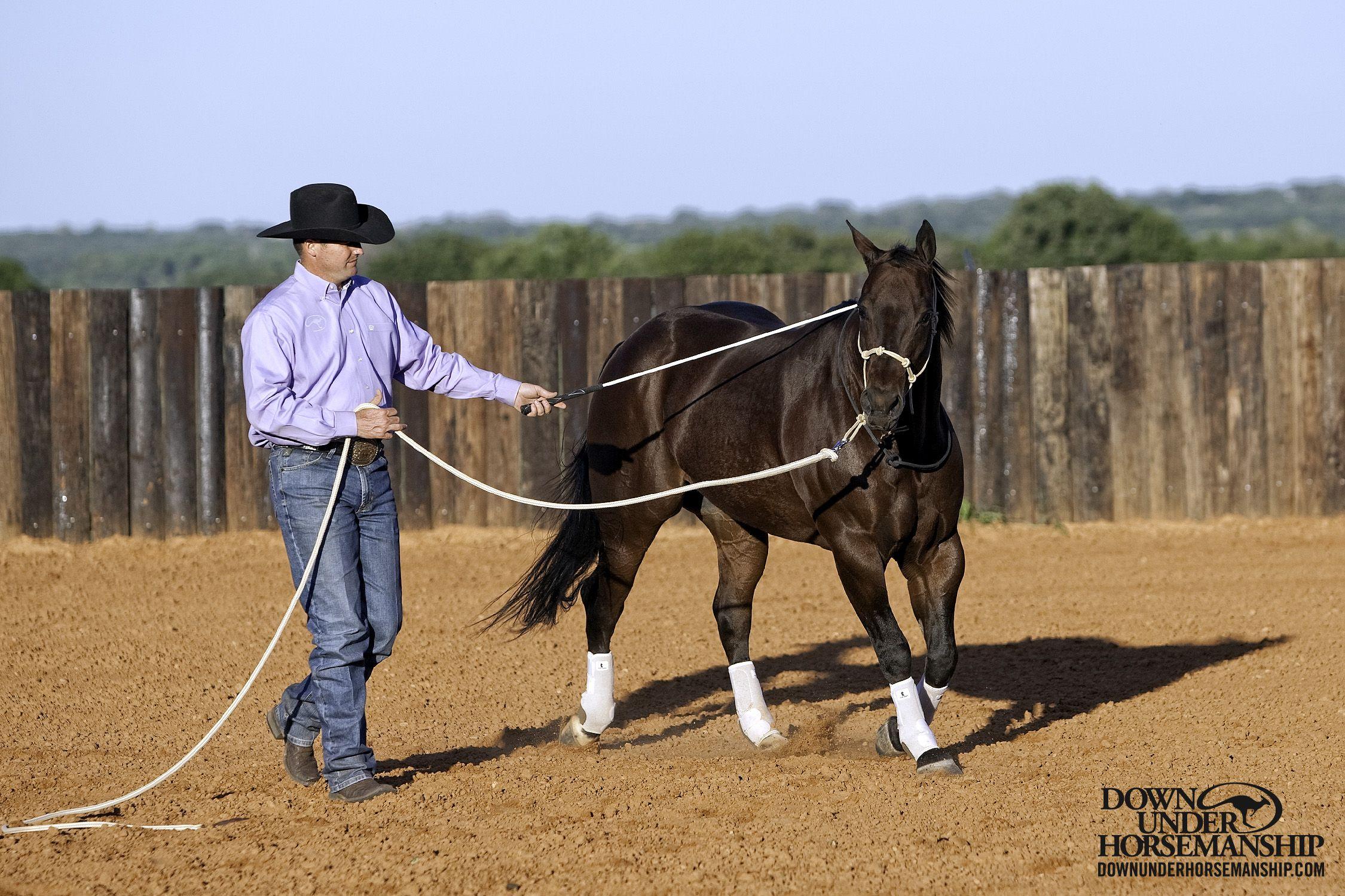groundwork horses - HD2250×1500