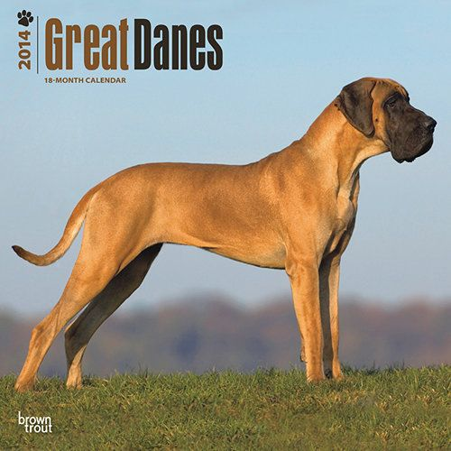 Great Danes Uncropped 2014 Wall Calendar Brown Trout Calendar