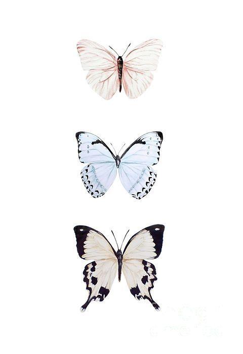 butterfly wallpaper vsco - Google Search | Butterfly ...