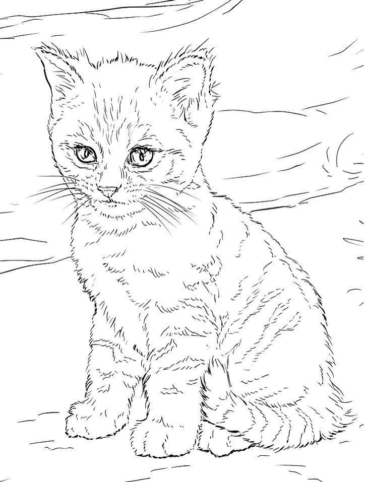 20 Cute Kitten Coloring Pages Printable Coloring Sheet In 2020 Cat Coloring Page Coloring Pages Planet Coloring Pages