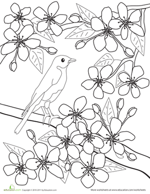 color the flowers cherry blossoms - Cherry Blossom Tree Coloring Pages