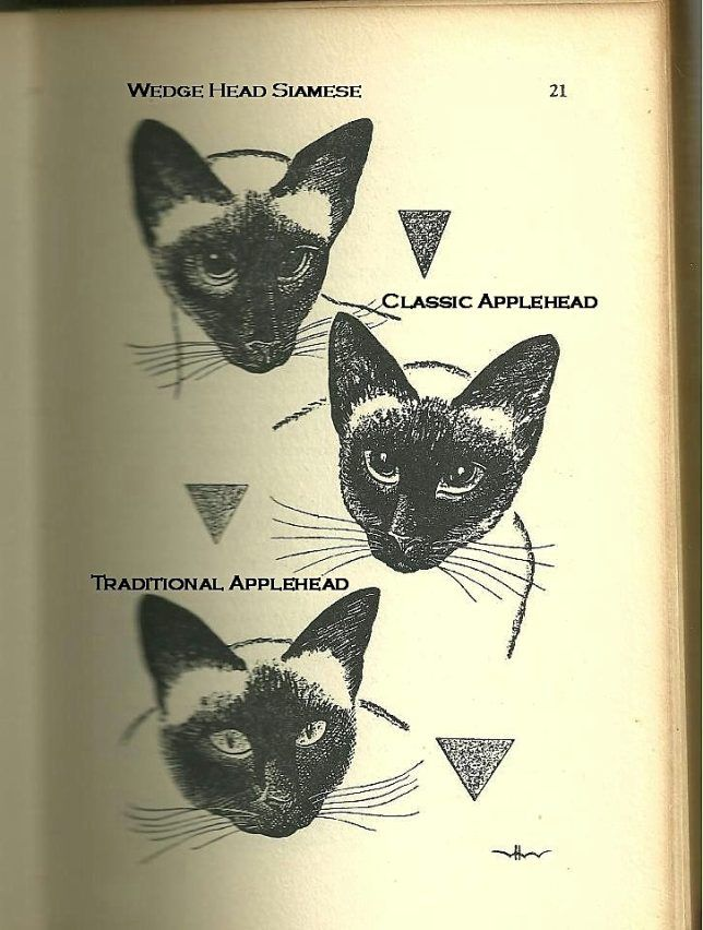 Permes Cattery Breeders Of Applehead And Classic Siamese And