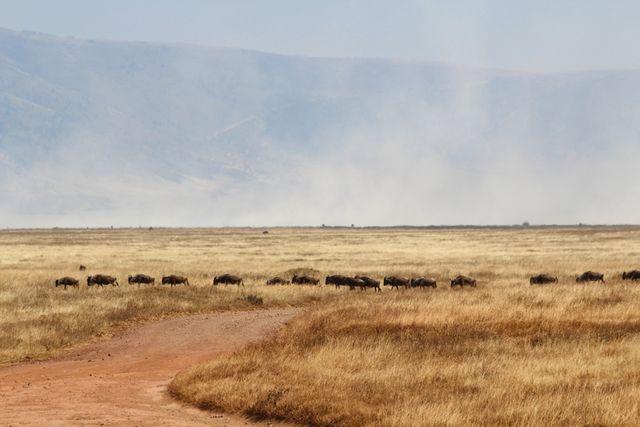 Ngorongoron kraaterin epätodellinen kauneus (via Bloglovin.com )