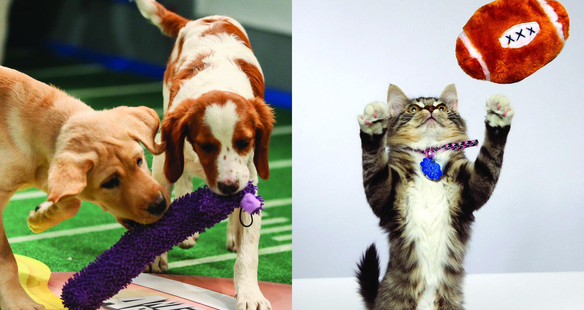 Battle Of The Real Super Bowls Puppy Vs Kitten Kitten Puppies Kitten Bowls