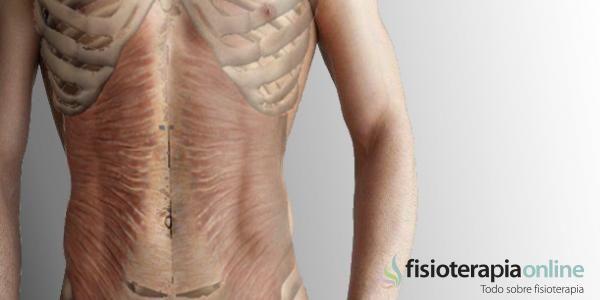 Músculo transverso del abdomen   Fisioterapia Online